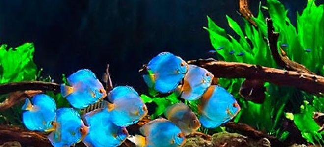 Зачем необходим домашний аквариум