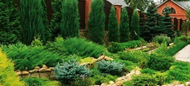 Живая изгородь: фото, из чего сделать, обрезка