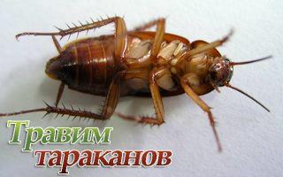 Все способы избавления от тараканов