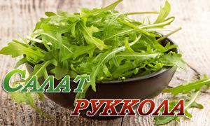 Все о салате руккола: полезные и вредные свойства