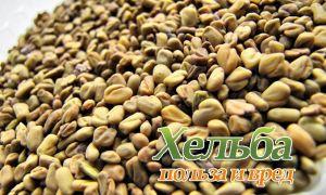 Полезные и вредные свойства семян хельба