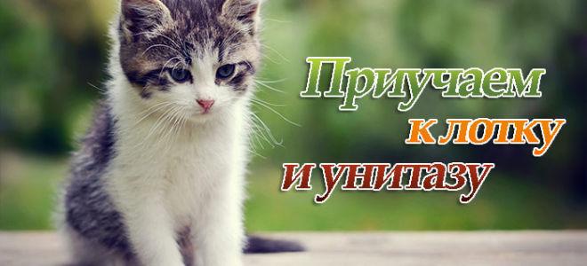 Приучаем котенка к лотку или унитазу