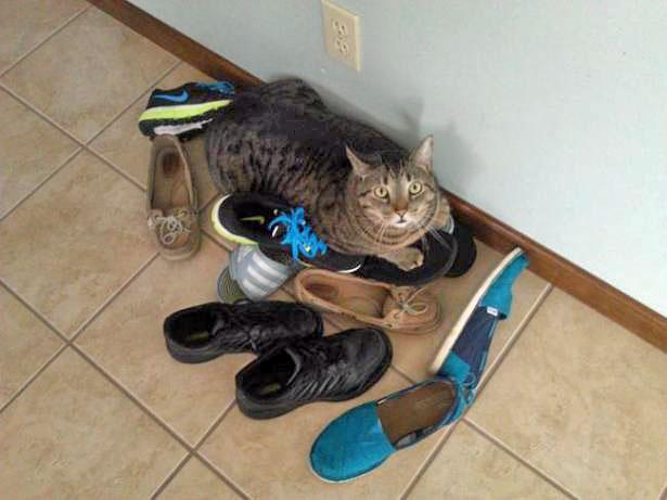 Запах мочи в ботинках