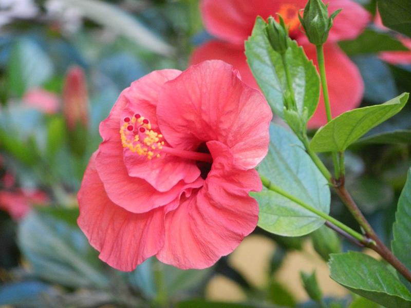 На фото королева цветов