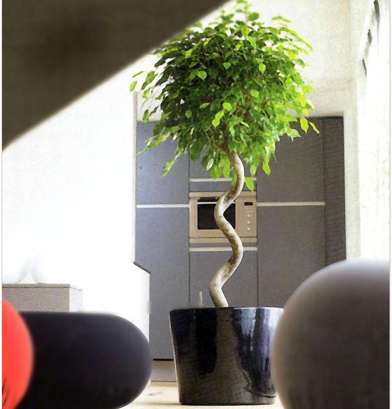 На фотографии дерево в форме штамба