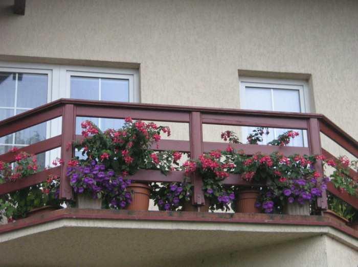 Ахименесы в интерьере и на балконе
